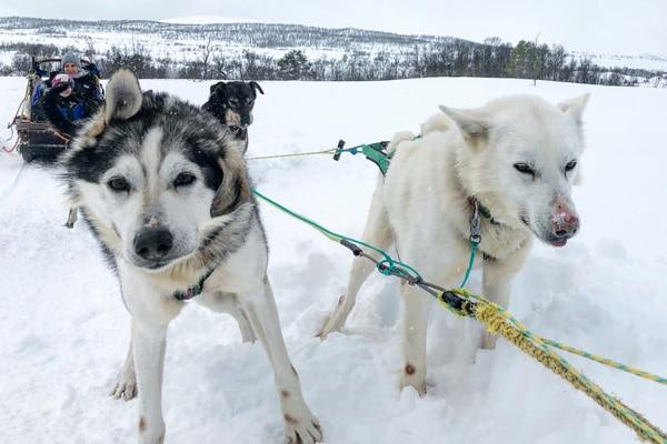 husky-schlittenfahrt_norwegen_tromso