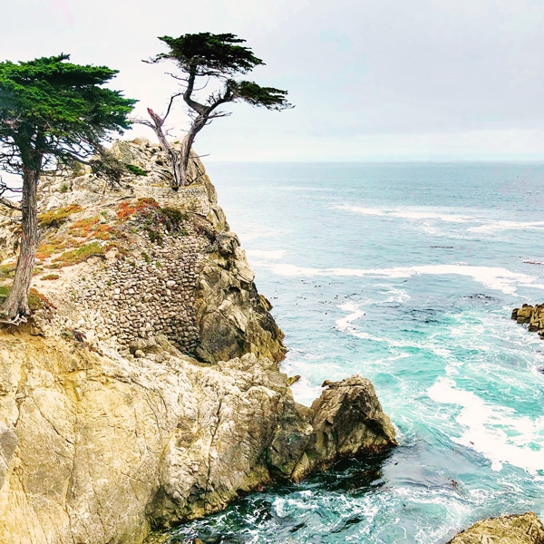 lone_cypress_zypress_highway_one-stop