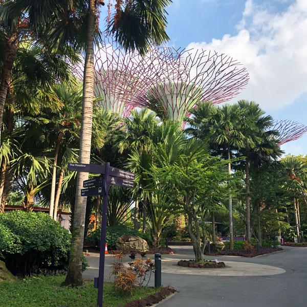 super_trees_riesenbäume_singapur