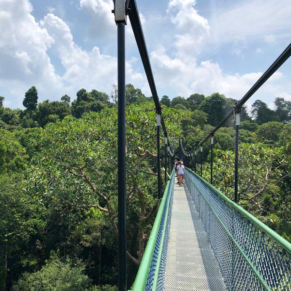 hängebrücke tree top walk singapur
