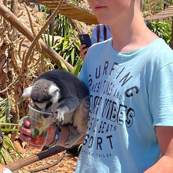 amazonas_park_lemuren_fuetterung_kreta