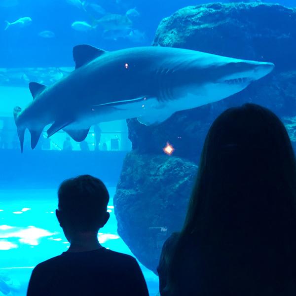 dubai_aquarium_mall
